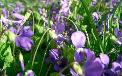 какие травы помогают вывести паразитов из организма