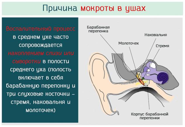 Откуда в ушах появляется мокрота – причина