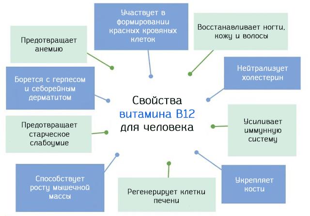 Значение витамина B12 для человека