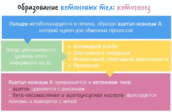 Ацетил-коэнзим A превращается в кетоновые тела