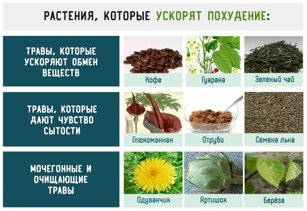 Растения, которые ускорят похудение