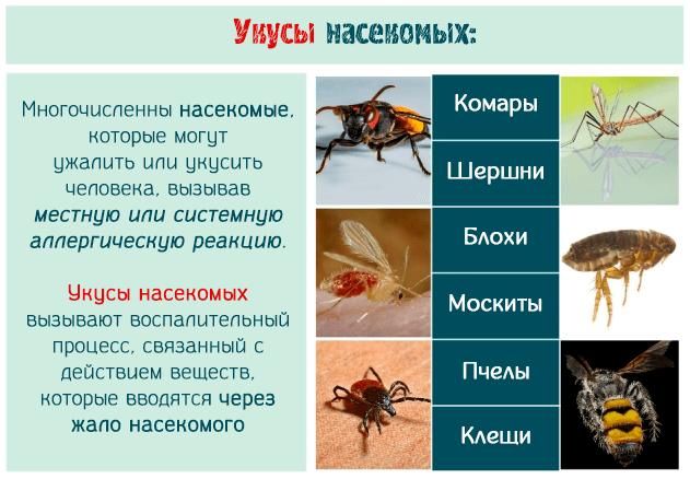 Укусы насекомых вызывают воспалительный процесс