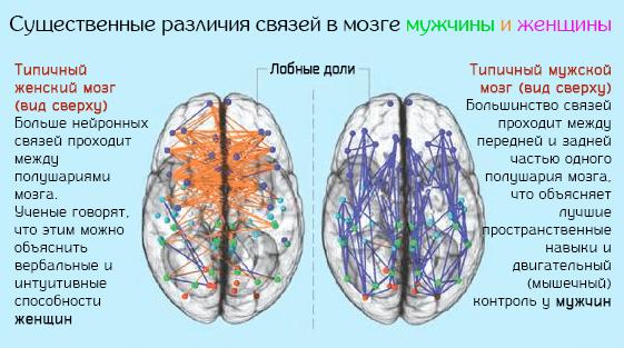 Существенные различия связей в мозге мужчины и женщины