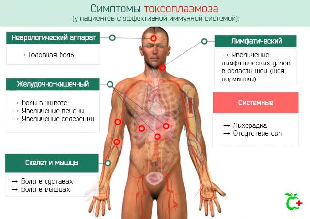 Симптомы токсоплазмоза человека при эффективном иммунитете