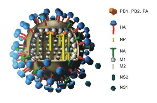 Модель молекулы вируса сезонного гриппа