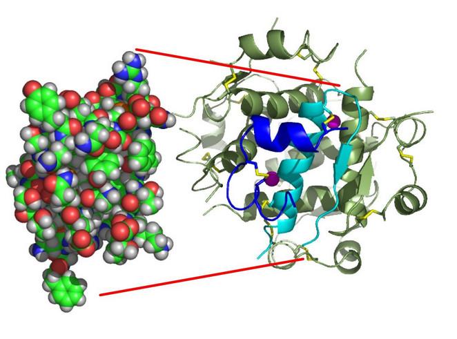 Модель молекулы инсулина
