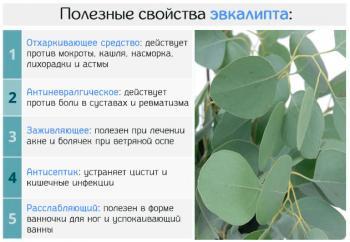 Эвкалипт: лечебные свойства и противопоказания листьев и масла