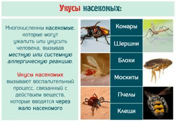 Укусы насекомых на коже человека