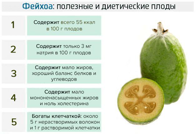 Полезные и диетические свойства плодов фейхоа