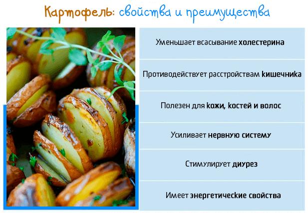 Свойства картофеля и преимущества для здоровья человека