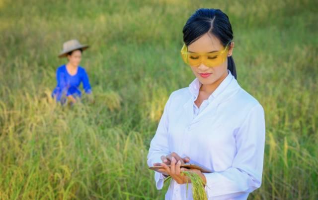 Азиатская девушка-исследователь изучает состояние риса на ферме
