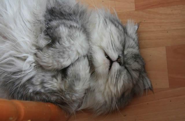 Спящий на полу кот