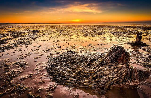 Скопление морских водорослей в линии прибоя