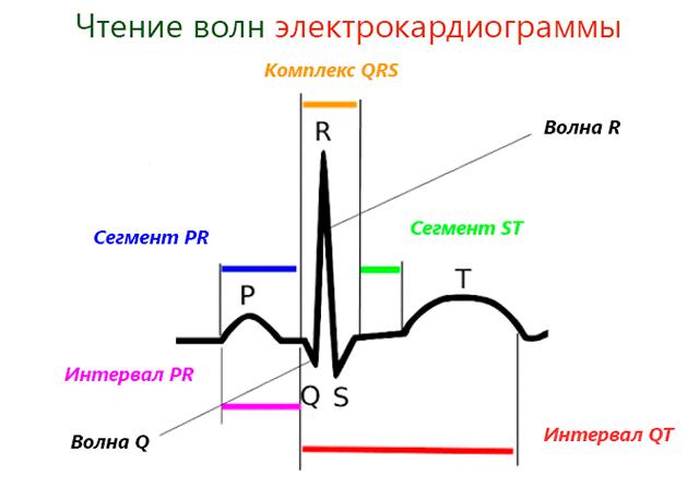 Правила чтения электрокардиограммы сердца