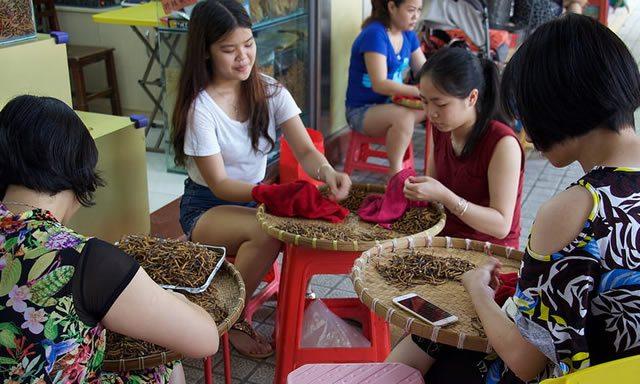 Китайские девушки заняты заготовкой лечебных трав
