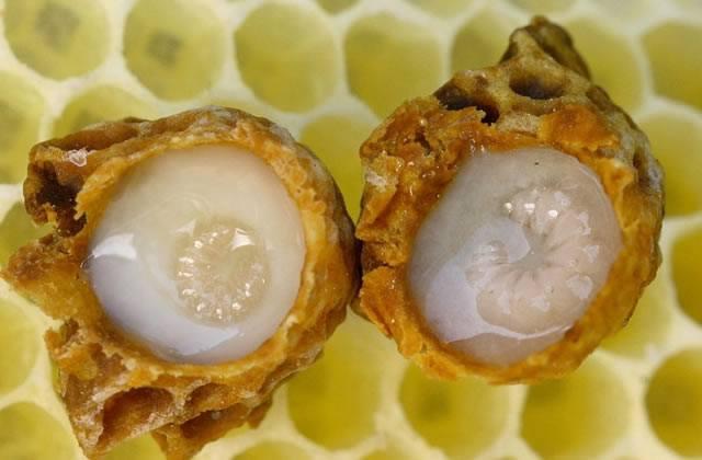 Маточники пчёл с личинками и маточным молочком