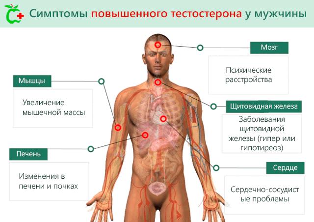 Причины повышения тестостерона свободного у мужчин