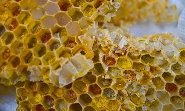 Кусок пчелиных сот с разноцветной пергой (смесь мёда и пыльцы растений)