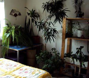 Растения в спальне очищают воздух