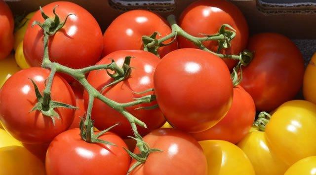 Гроздья красных и желтых томатов