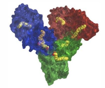 Молекула человеческого альбумина