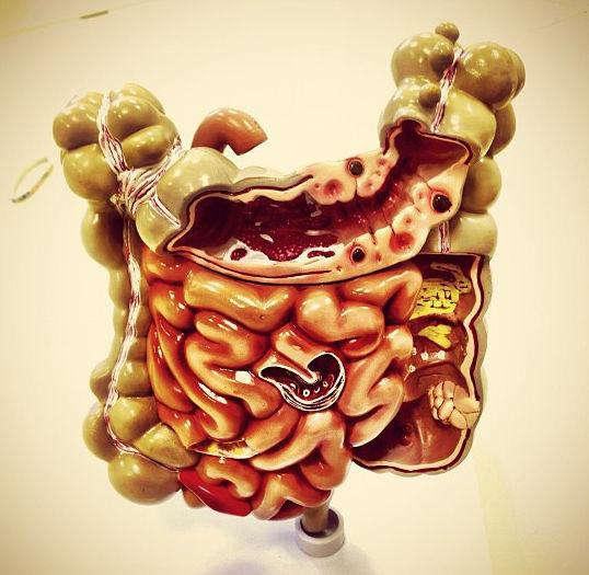 Пластиковая модель кишечника человека
