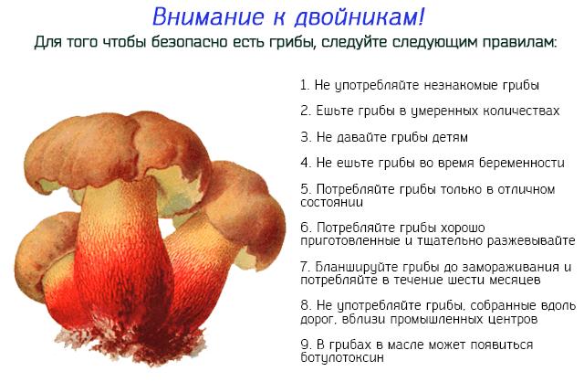 Для того чтобы безопасно есть грибы, следуйте следующим правилам
