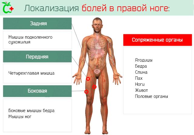 Локализация болей в правой ноге