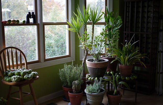 Растения в доме очищают воздух