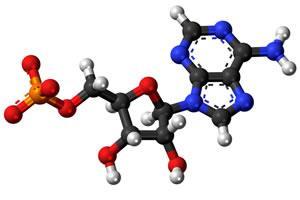 3D модель циклического аденозинмонофосфата
