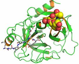 Простат-специфический антиген – трёхмерная модель