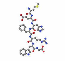 Молекула адренокортикотропного гормона