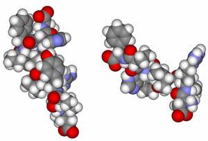 Трехмерная модель молекул ангиотензина I и II