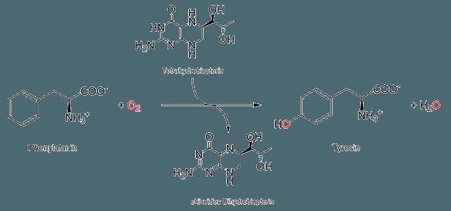 Гидроксилирование фенилаланина в тирозин