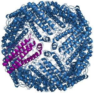 Структура ферритинового комплекса у мыши